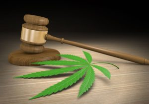 growing weed law