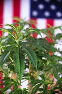 medical marijuana legalized
