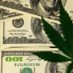 cannabis license business