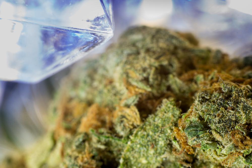 marijuana growing male plants