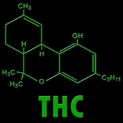 Effects of Marijuana on Blood Pressure