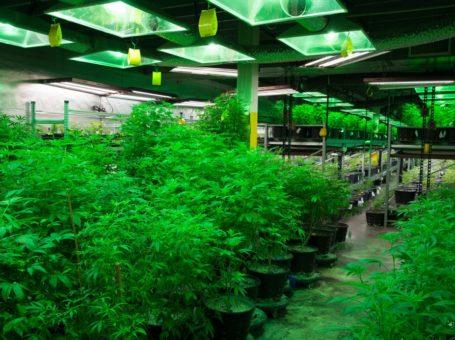 Methods of Growing Medical Weed