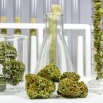 The Increasingly Legal, Medical and Recreational Use of Marijuana