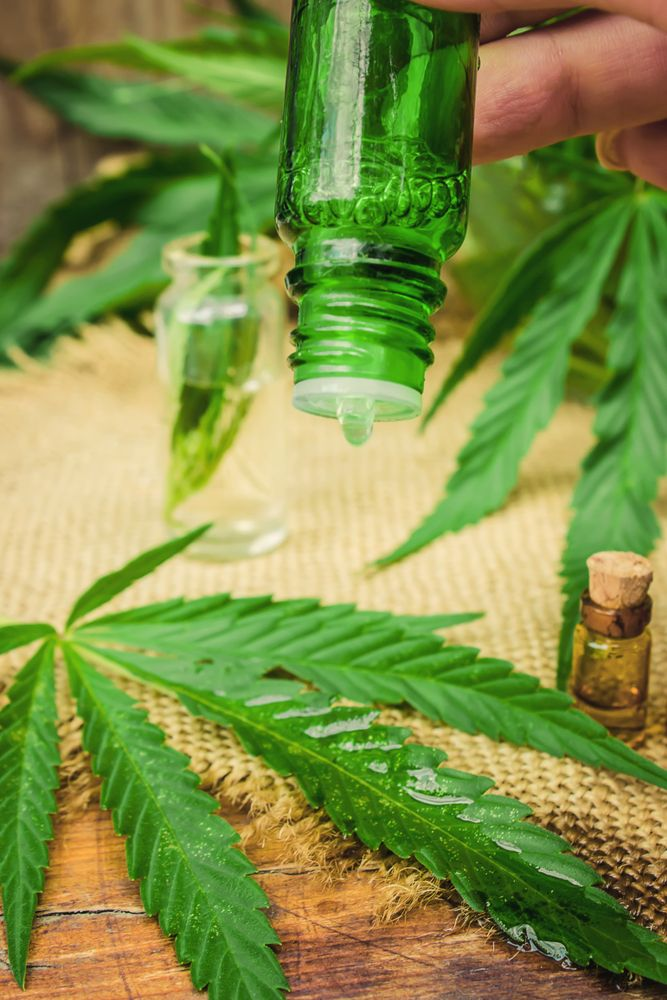 hempseed oil is extracted from the cannabis plant seeds