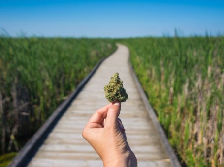 The Some Scientific Facts about Marijuana