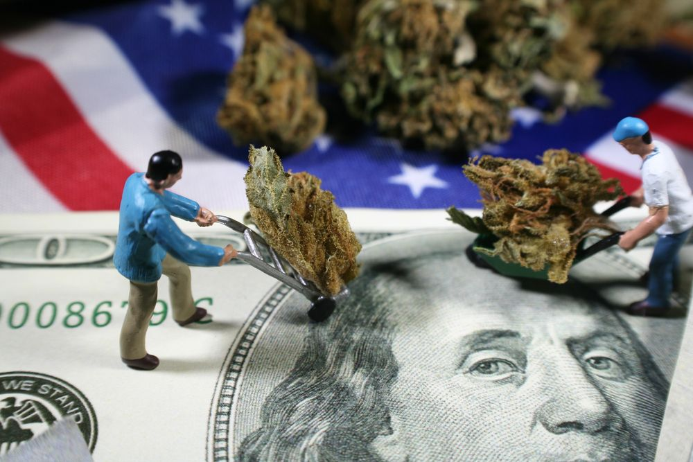 cannabis is usually sold in grams, ounces or pounds