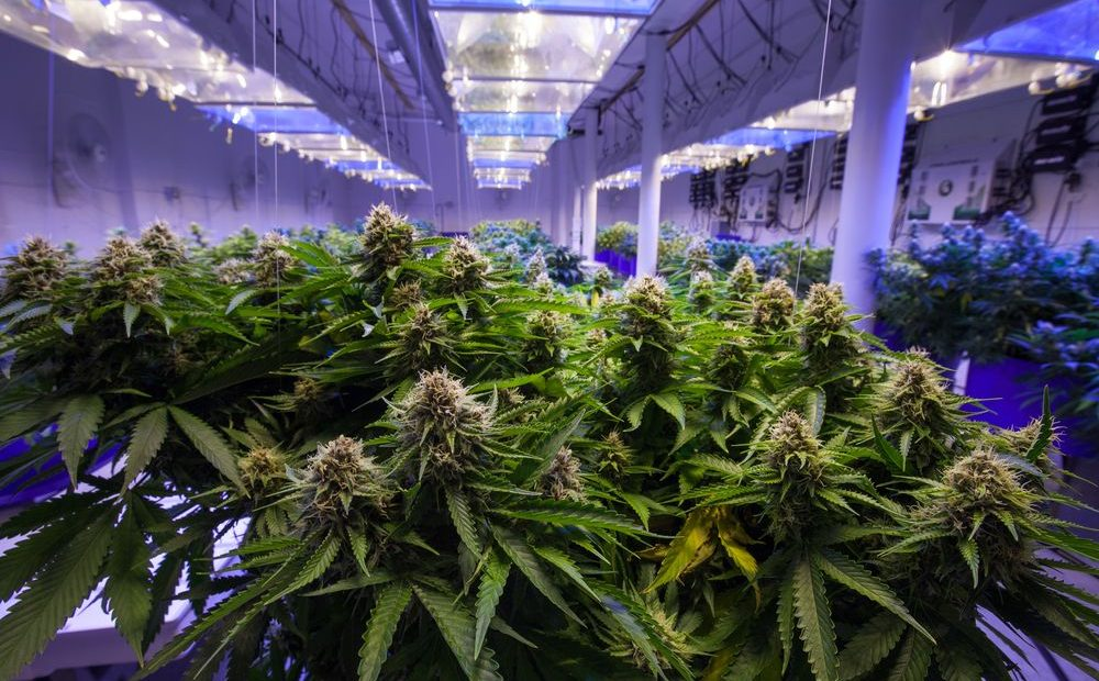 about Growing Weed Indoors, sets a range of challenges