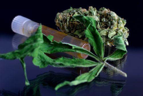 What Causes Weed Allergies