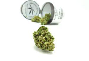 Making cannabis dabs