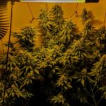 Best Air Purifier for Growing Weed