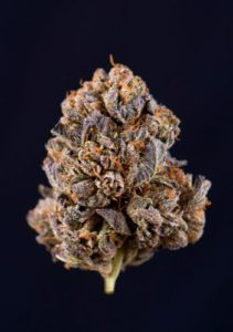 grower develops a new strain, he will give it a new name to make it more marketable
