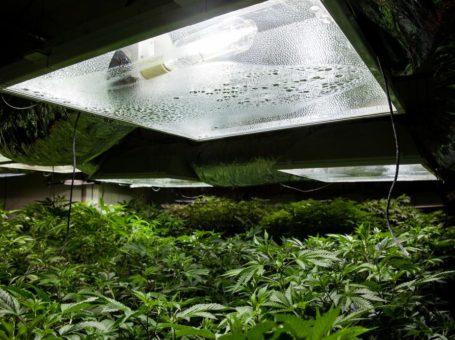 Top Hacks for Growing Excellent-Tasting Weed